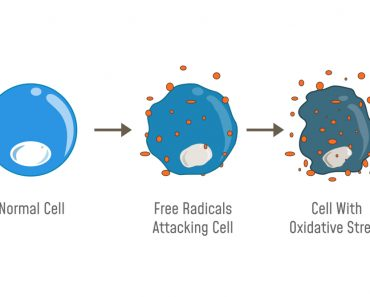 Oxidative Stress Diagram. Free radicals attacking cell(Fancy Tapis)s