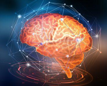 nerve cells of the human brain( Yurchanka Siarhei)s