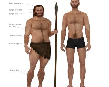 Digital illustration and render of a Neanderthal man(Nicolas Primola)s
