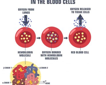 Vector Science medical icon blood hemoglobin molecule(ShadeDesign)S