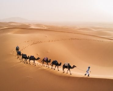 camels walk thru the desert on the western part of The Sahara Desert in Morocco(MonoRidz)s