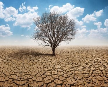Dry cracked land with dead tree and sky in background a concept of global warming(kpboonjit)s
