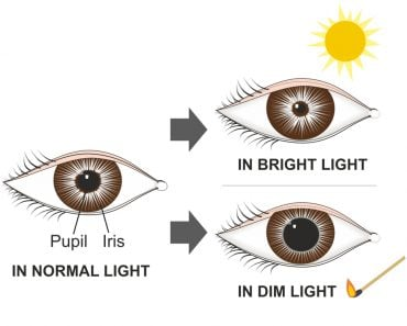 The pupillary reflex controls the diameter of the pupil(Soleil Nordic)s