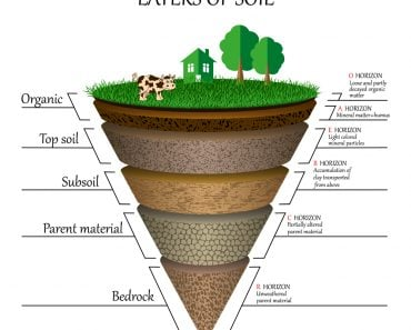 Layers of soil(Ellen Bronstayn)S