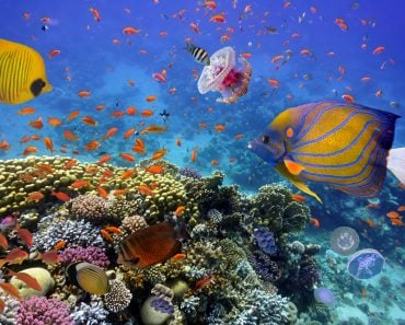 Coral Reef and Tropical Fish in the Red Sea, Egypt(Vlad61)s
