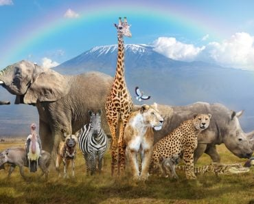 Large group of African wildlife animals in a magical bream scene(Susan Schmitz)S