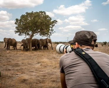 Male photographer shooting pictures of the savannah on a safari game drive(FranciscoMarques)s