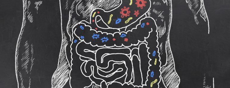 Intestines with Gut Bacteria on Blackboard(T. L. Furrer)S