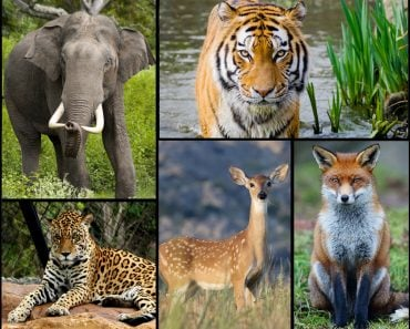wild animal collage