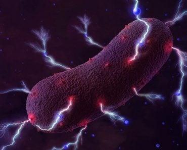 Bioelectricity