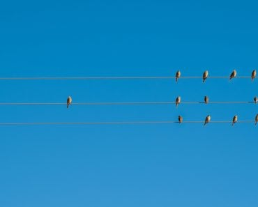 Birds on elecricity wires against blue sky(22Images Studio)s