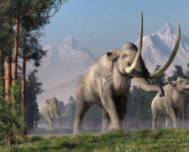 The Columbian Mammoth is an extinct animal that inhabited warmer regions of North America during the Pleistocene(Daniel Eskridge)s
