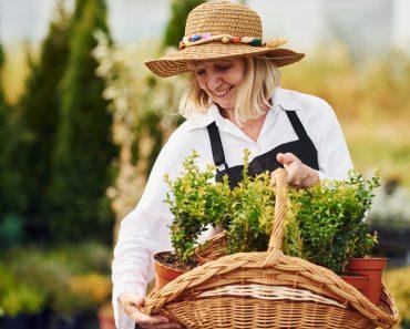 Taking plants in pots by using basket(Standret)s