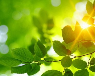 Green,Leaves,And,Sun,In,Spring.
