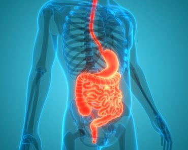 Human Digestive System Anatomy( Magic mine)s