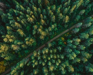 Pine,Forest,From,Above,,Fall,Season,,Forest,Road