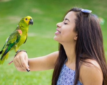 girl talking with parrot