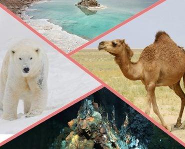 Polar bear, camel, hydrothermal vent and dead sea
