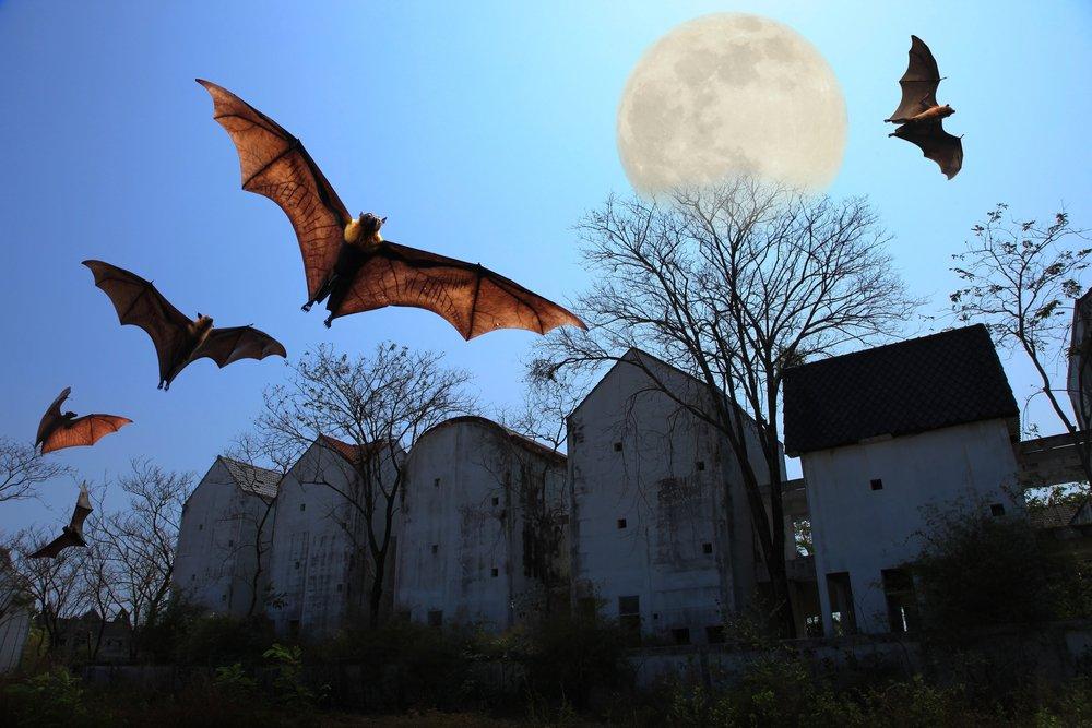 Bats Nocturnal