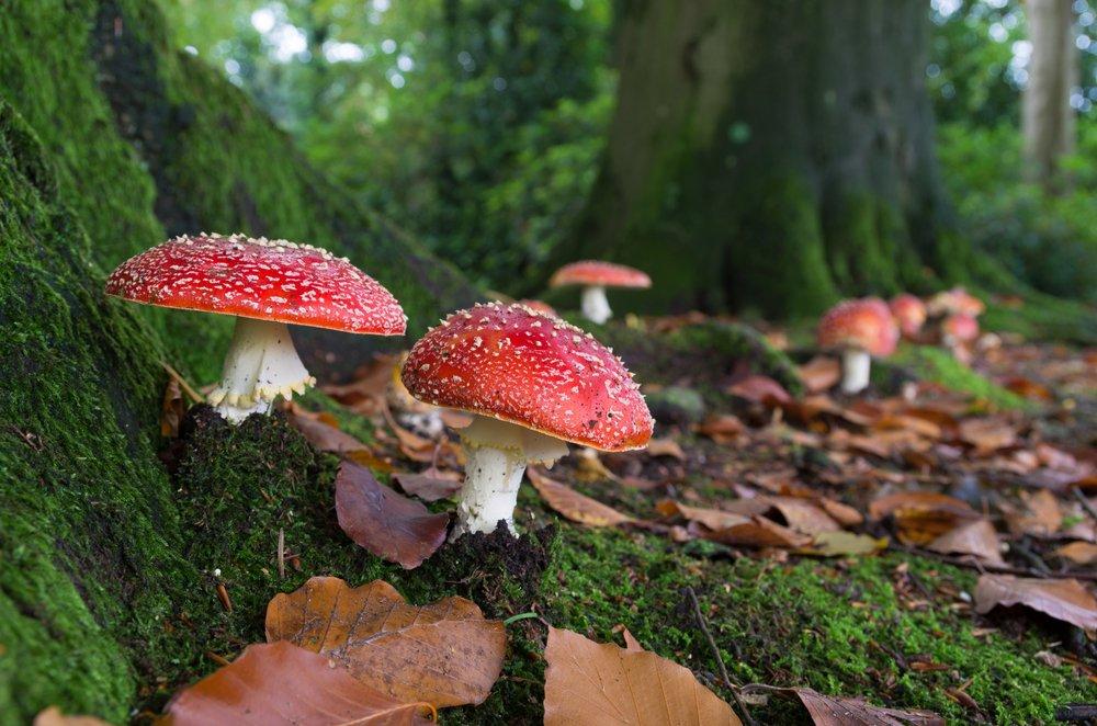 Growing Mushroom