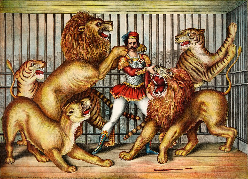 Nineteenth century etching of lions and tigers in captivity with a keeper