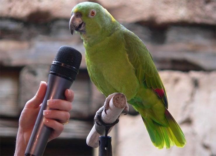 Takling Parrot
