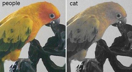cat-color-vision