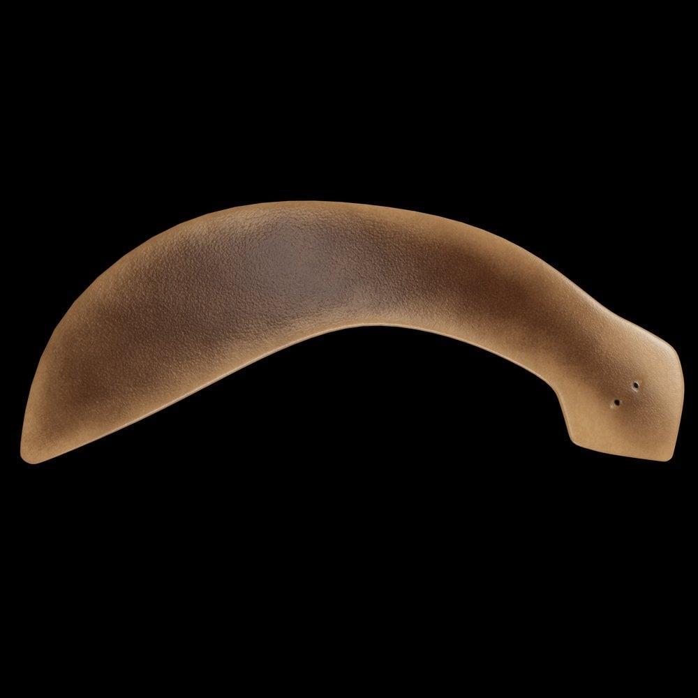 Planaria Flatworm