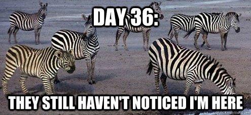 zebra, Are Zebras Black with White Stripes or White with Black Stripes?, Science ABC, Science ABC