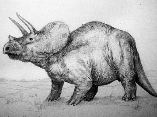 Triceratops. Because hips do lie.