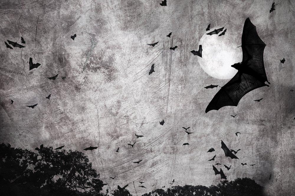 Bats in Dark