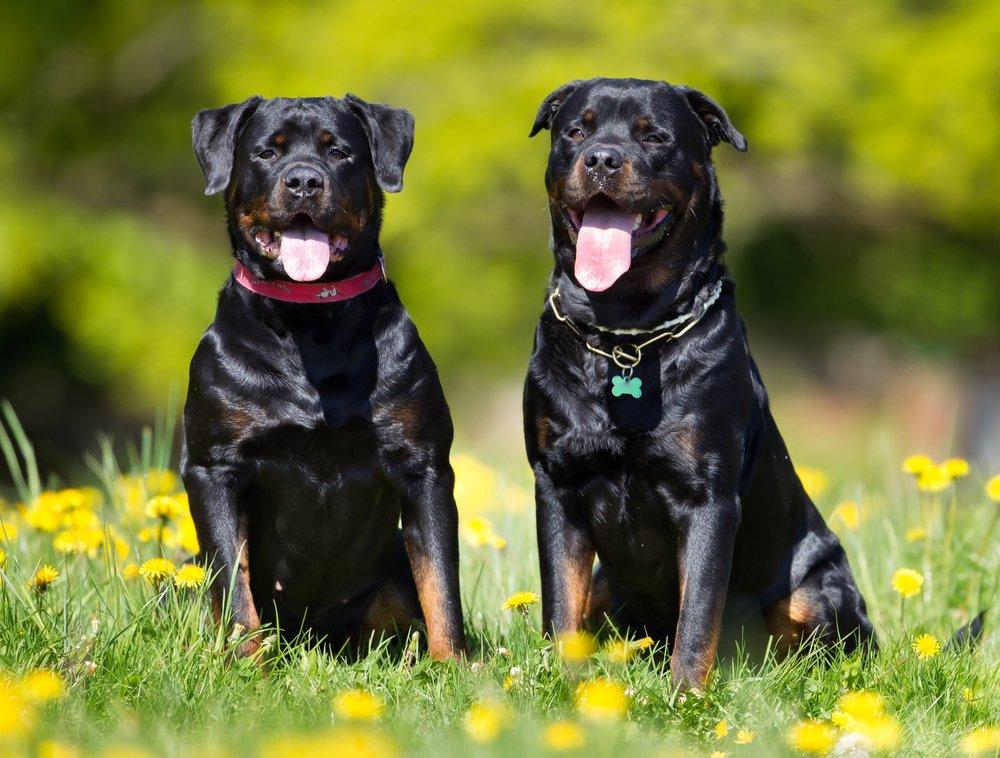 Dog Tongue 2