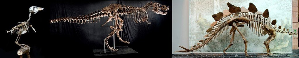Skeletons of sparrow, T. Rex and stegosaurus. Need I say more?