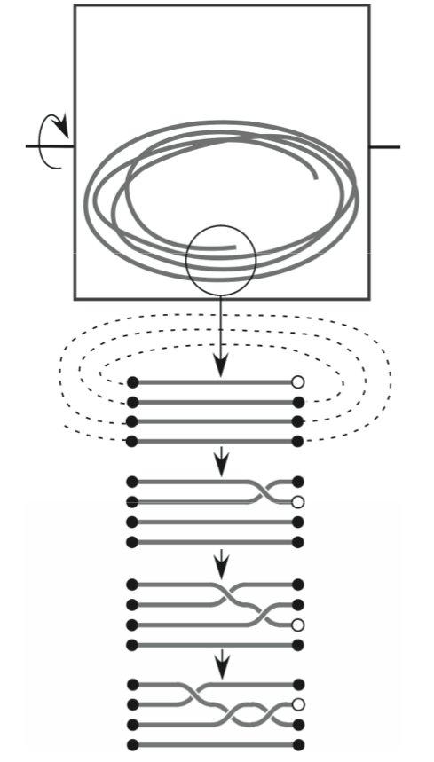 knot probability