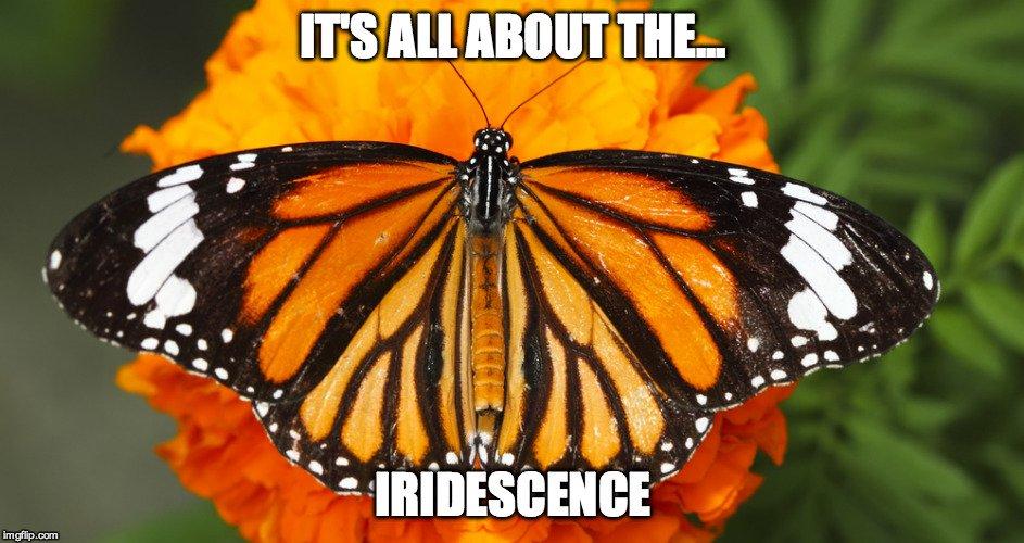 Butterfly iridescence meme