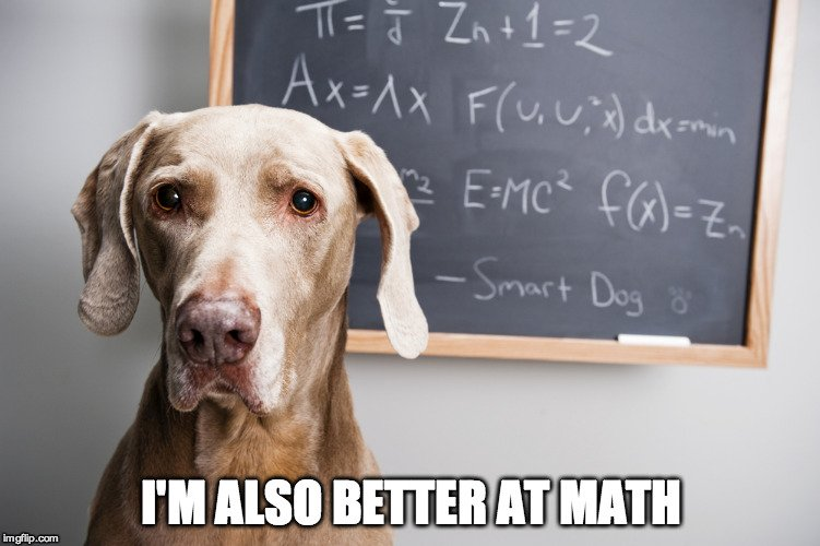 Dog Math Meme