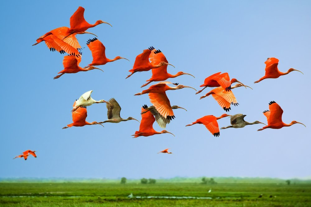 Flying Colorful birds