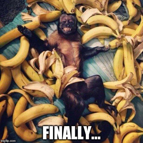 monkey in bananas