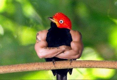 strong-bird