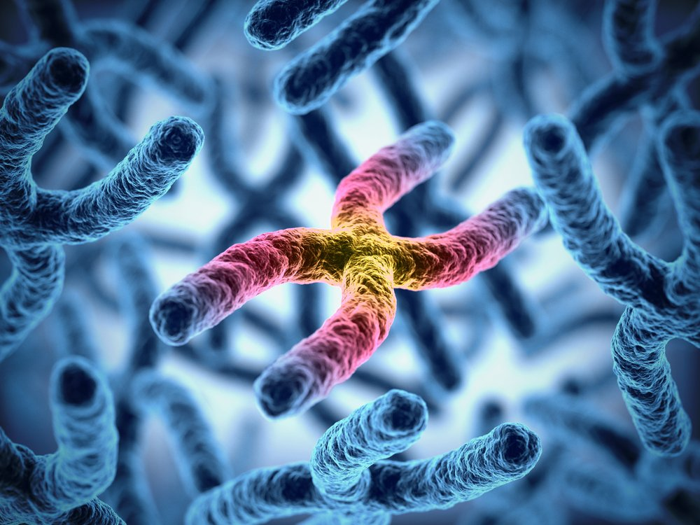 Chromosomes (Credit: koya979 /Shutterstock)