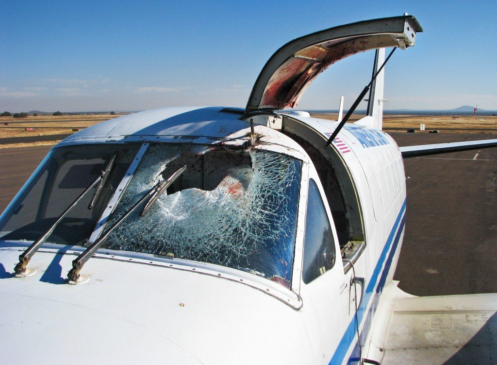 What Is A Bird Strike? What Really Happens When A Bird Strikes An Airplane?, What Really Happens When A Bird Hits An Airplane?, Science ABC, Science ABC