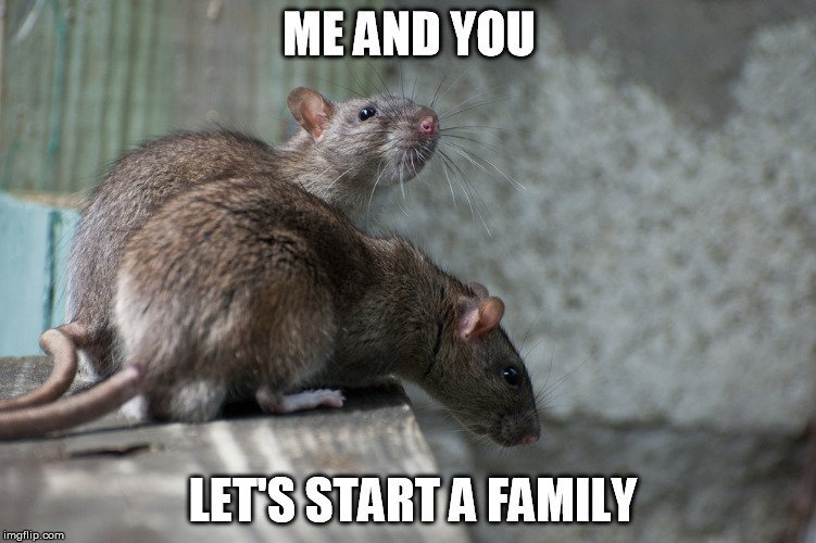 rat meme1