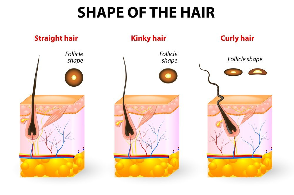 shape of the hair