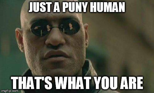 puny human meme