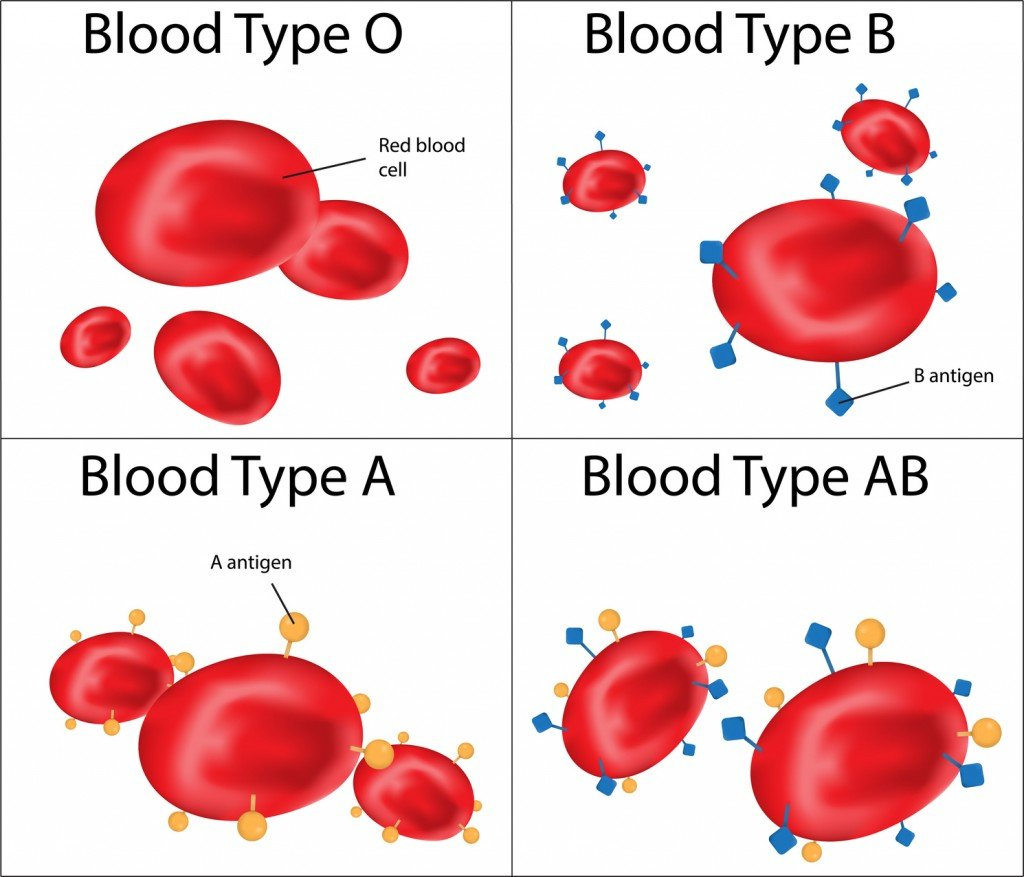 Human Blood Types (Photo Credit: joshya / Fotolia)