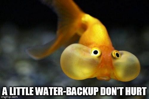 fish meme1