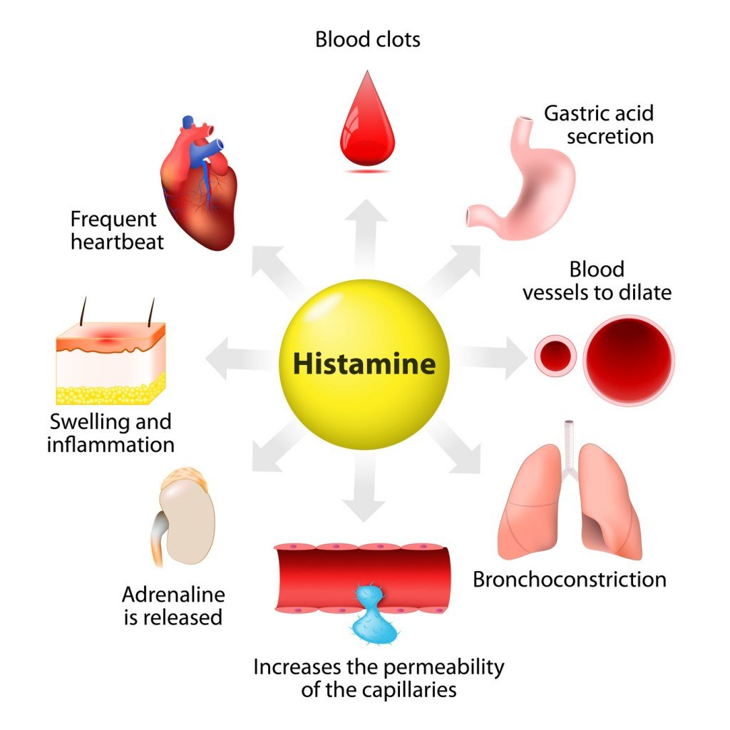 Histamine's Many Functions (Photo Credit: designua / Fotolia)