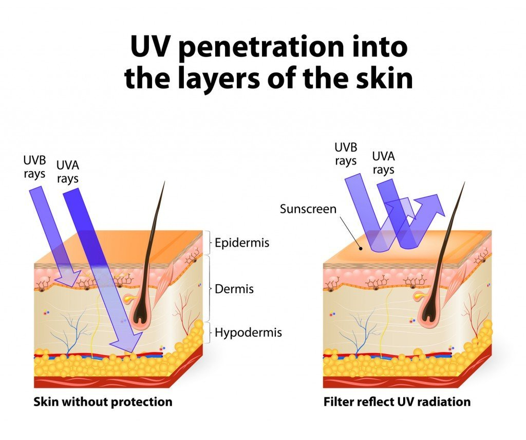 UV Radiation Penetration (Photo Credit: designua / Fotolia)