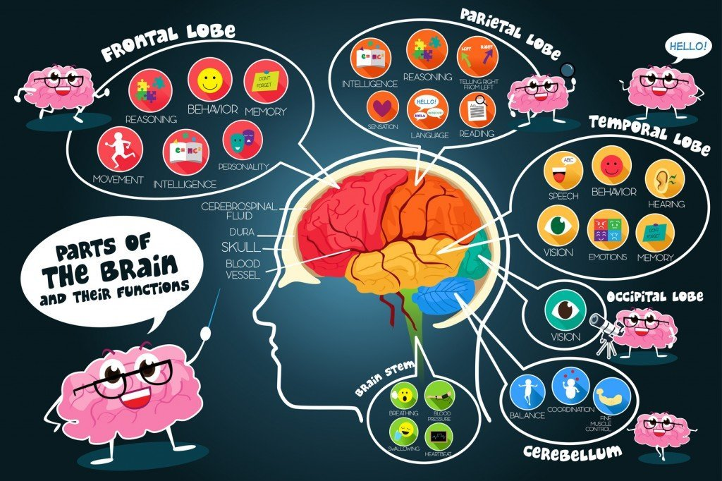 The Functions of the Brain (Photo Credit: artisticco / Fotolia)