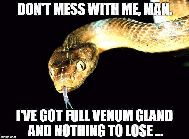 Snake Meme